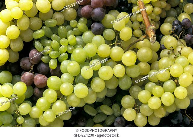 Various green and red grape varieties (close-up, 1)