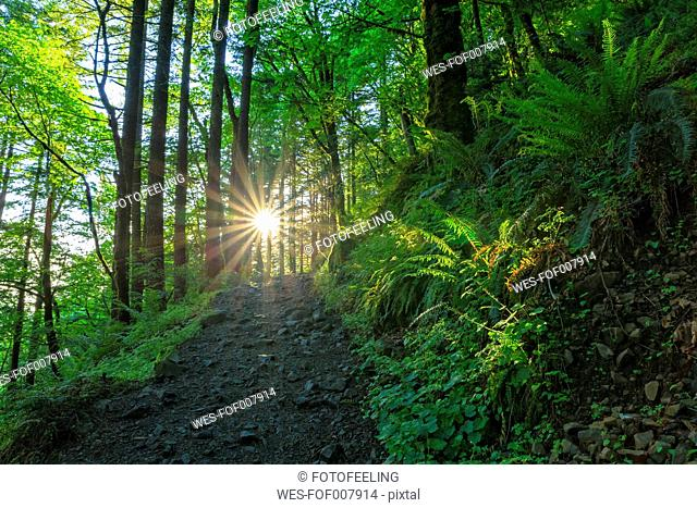 USA, Oregon, Columbia River Gorge, Multnomah County, hiking trail in forest against the sun