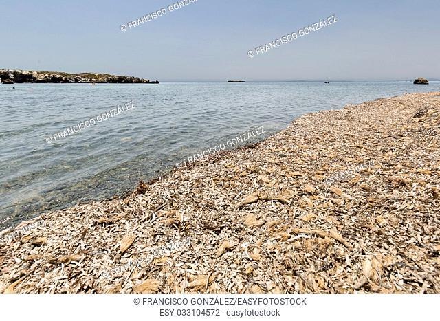 Landscape in summer in Tabarca Island, Alicante province, Spain