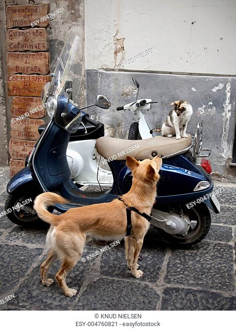 Dog scooter city Stock Photos and Images | age fotostock