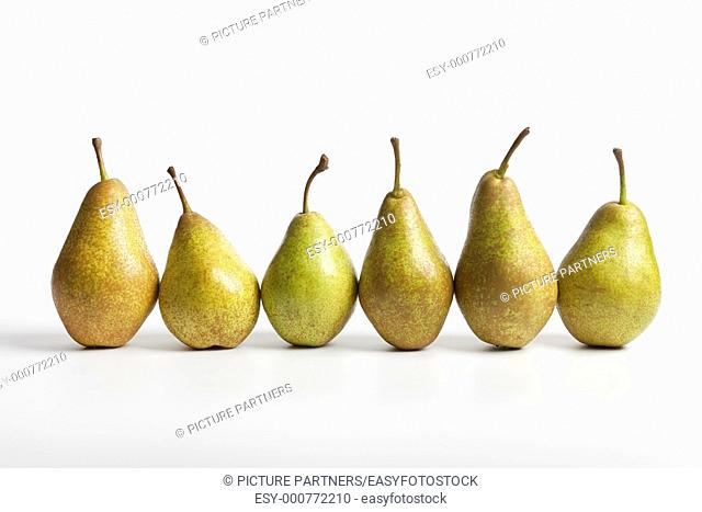 Row of six Pears Triomphe de Vienne