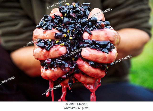 A man with a handful of fresh crushed red grapes