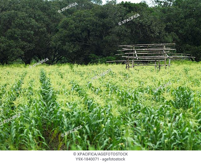 And agriculture in johor Stock Photos and Images | age fotostock