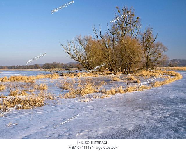 Germany, Brandenburg, Uckermark, Criewen, Lower Oder Valley National Park, winter day in the Oder meadow, ice rink, willow trees