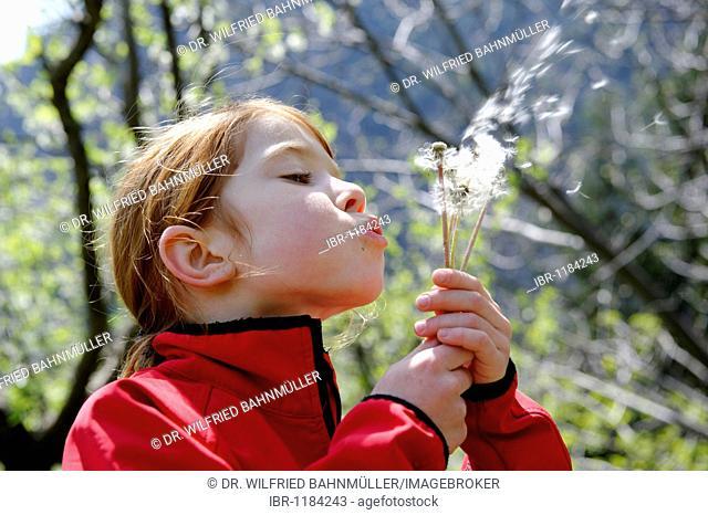 Child with dandelion clock