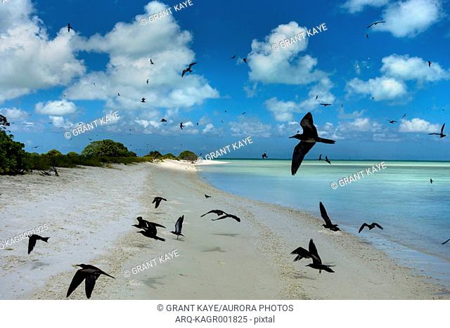 Flock of birds flying over coastline of Christmas Island, Kiribati