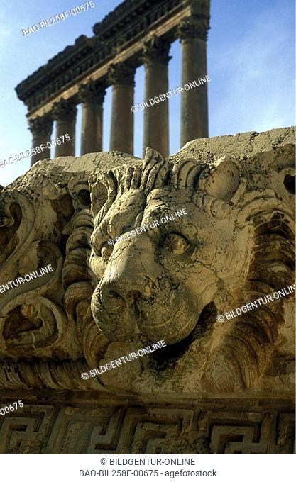 Six columns with a lion from stone in the ruins of Baalbek in osten from Lebanon in the Middle East in Arabia
