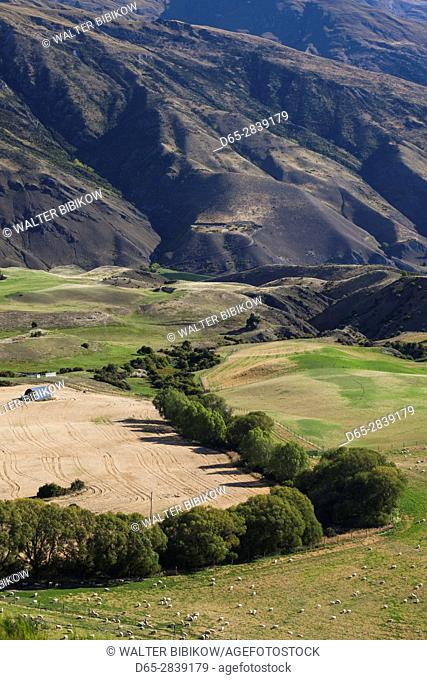New Zealand, South Island, Otago, Cardrona-area, landscape from the Crown Range Road, highest asphalt road in NZ, 1076 meters