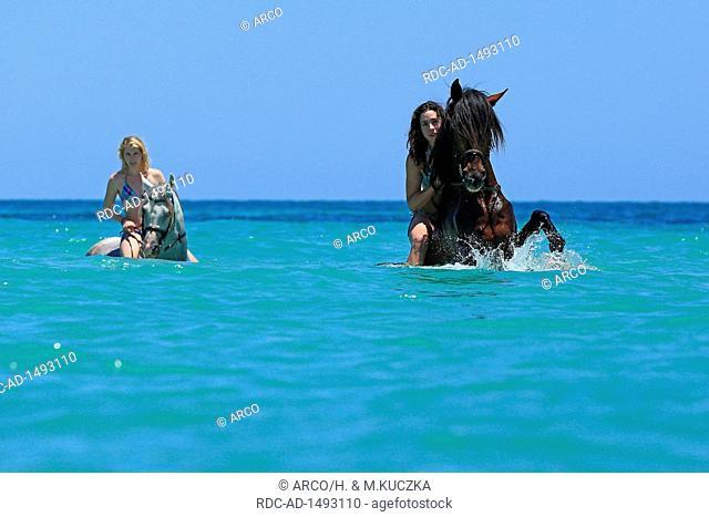 Reiturlaub auf Djerba, Tunesien, Afrika, Schwimmen mit Berberpferden