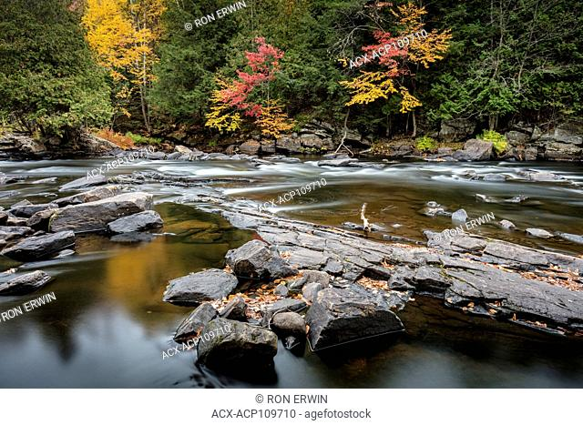 Autumn colours in Oxtongue Rapids Park, Dwight, Ontario