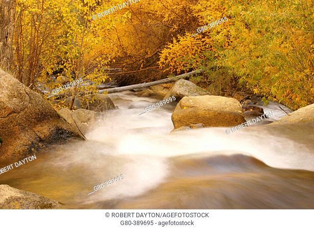 Stream in fall, Bishop Creek Canyon. California, USA
