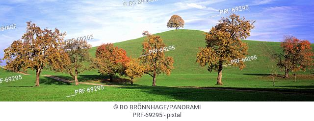 Fall Trees Cantone Zug Switzerland