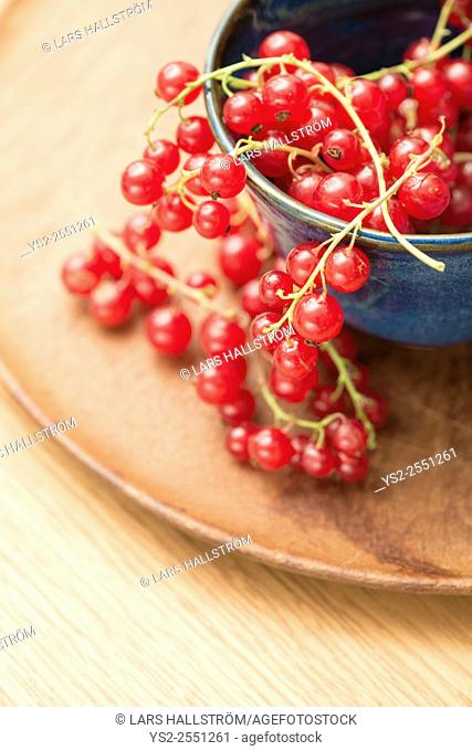 Closeup of red ripe redcurrant berries in a bowl
