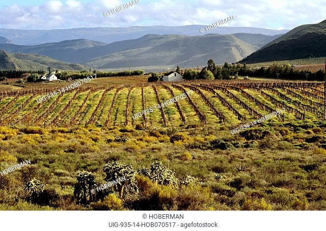 Cape Wine Route, Montagu, Western Cape