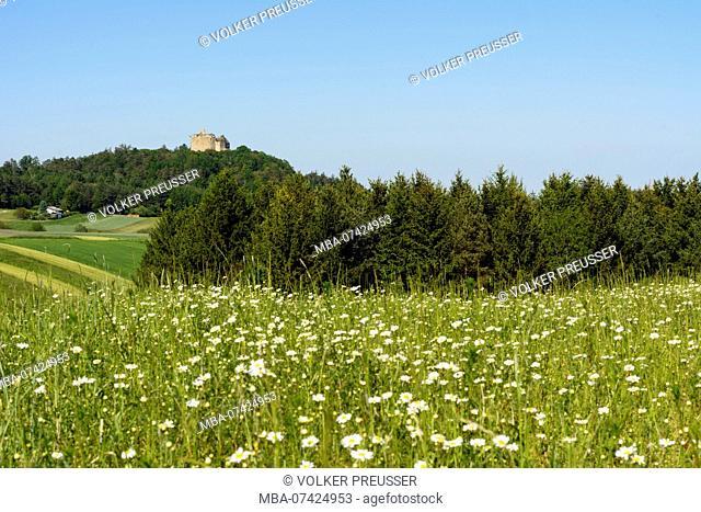 Markt Sankt Martin, castle ruin Landsee, Naturpark Landseer Berge (natural preserve Landsee mountains), meadow, Mittelburgenland, Burgenland, Austria