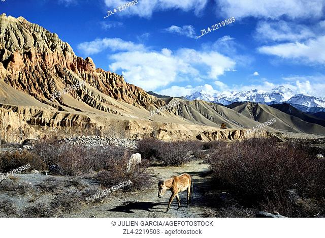 Red and ochre rock formations and horses in a valley near Dhakmar village. Nepal, Gandaki, Upper Mustang (near the border with Tibet)