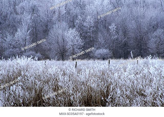 Hoar frosted field and bush, Ottawa, Ontario, Canada