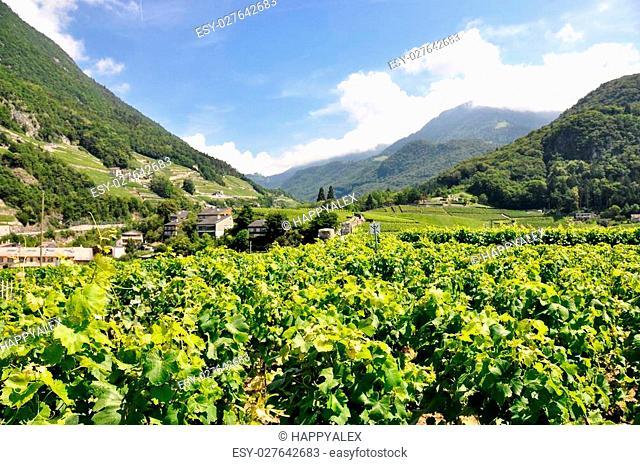 Vineyards near Montreux, Switzerland