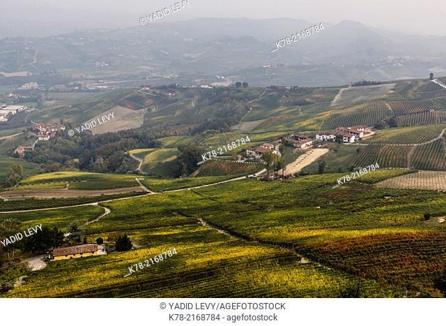 Vineyards near La Morra, Langhe, Cuneo district, Piedmont, Italy