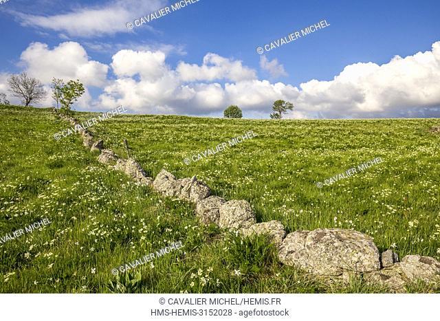 France, Lozere, Les Causses et les Cevennes, cultural landscape of the Mediterranean agro pastoralism, listed as World Heritage by UNESCO