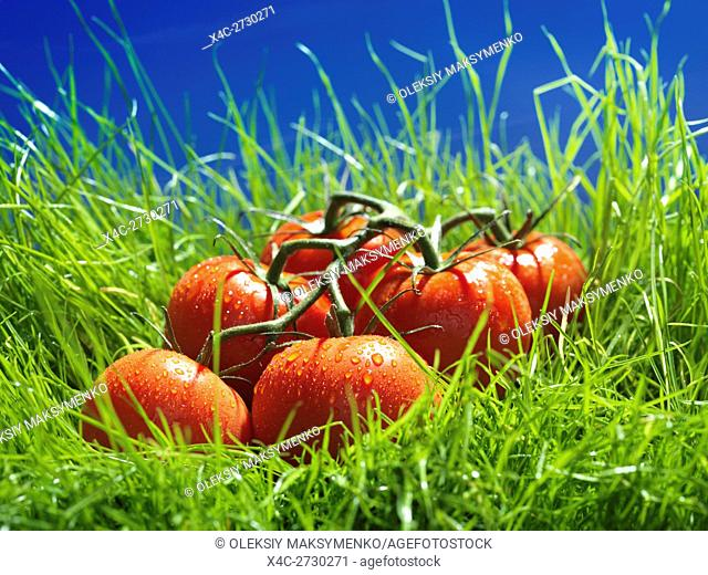 Vine-ripened tomatoes in green grass under blue sky artistic food still life