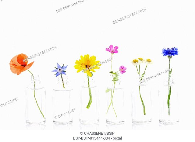 Healing flowers in bottles for herbal medicine onwhite background