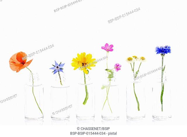 Healing flowers in bottles for herbal medicine onwhite background