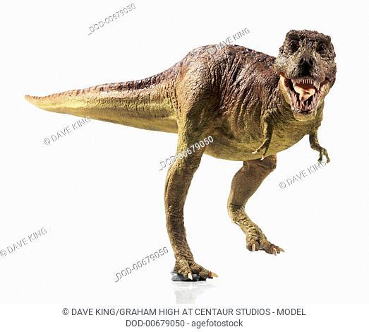 Overhead view of Tyrannosaurus rex model