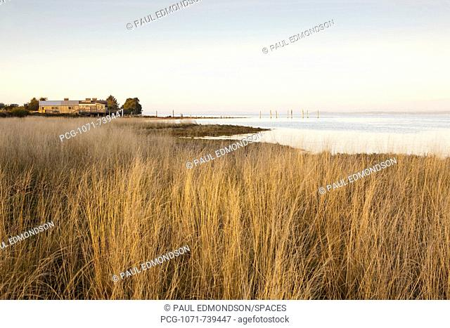 Tidal Grasses and House