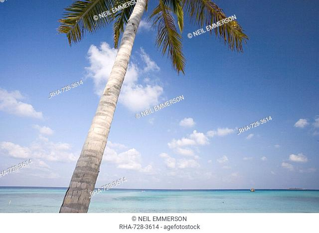 One Palm Tree, The Maldives