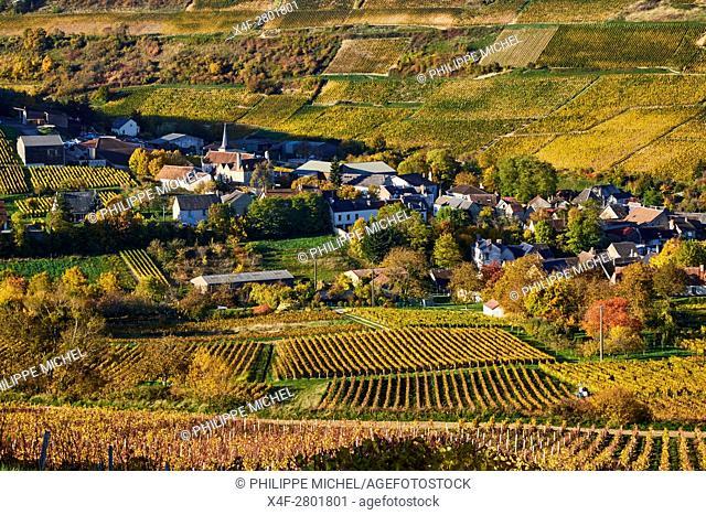 France, Cher 18, Chavignol village, vineyard in autumn