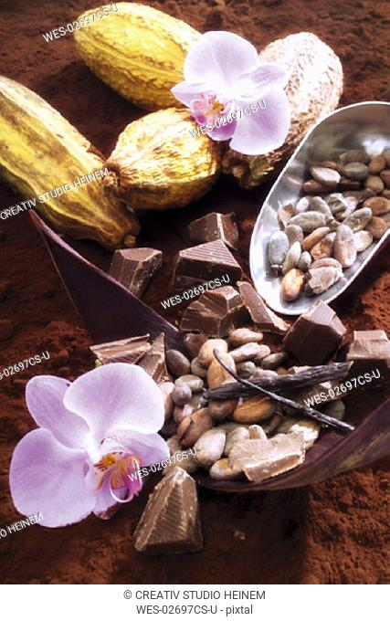 Cacao, crop, seeds and chocolate