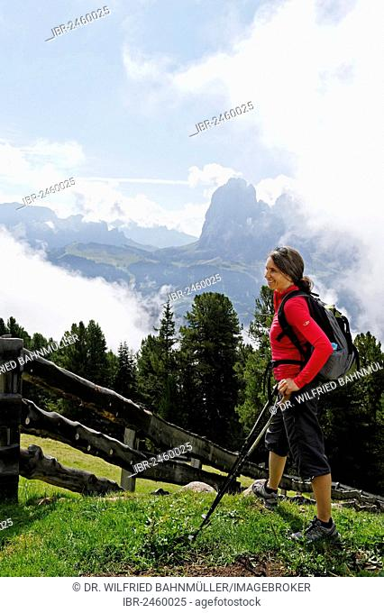 Hiker standing on the Raschoetz alp, Langkofel mountain at the back, near St. Ulrich, Val Gardena valley, Province of Bolzano-Bozen, Alto Adige, Italy, Europe