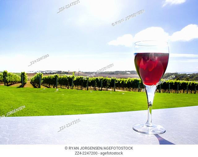 Horizontal winery photo of a glass to red in front of a Tasmania countryside grapes crop. Australian wine