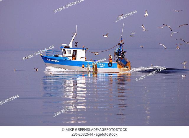 Fishing boat followed by gulls, Gulfe de Morbihan, Britanny, France