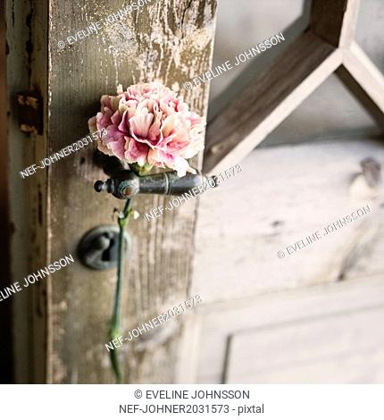 Pink carnation on door knob