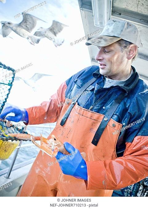 A man holding a Norway lobster, Sweden