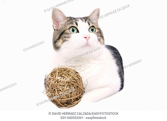 Beautiful cat over white isolated background