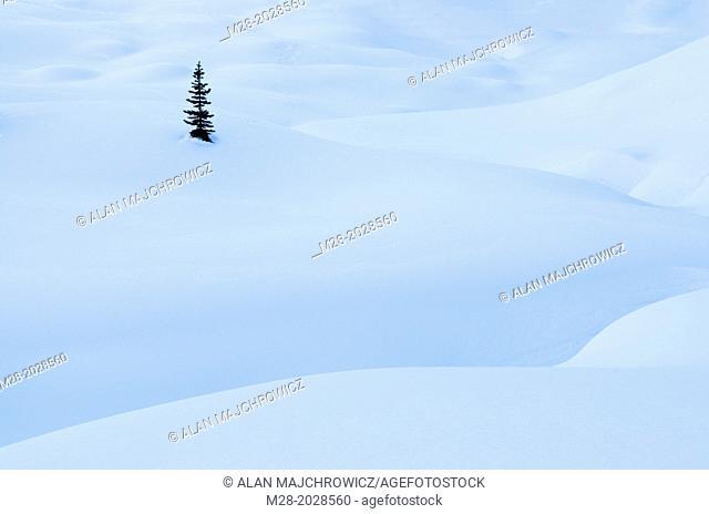 Snow pillows, Marriott Basin in winter, Coast Mountains British Columbia