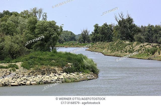 Crisan, Danube landscape near Crisan at the Sulina branch, Danube riverbank, tributary, woodland, Romania, Tulcea County, Dobrudja, Danube Delta