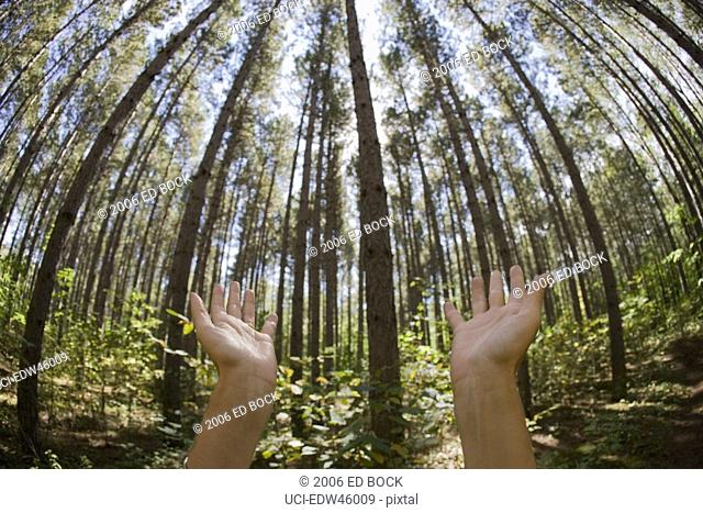 Man holding hands out to forest