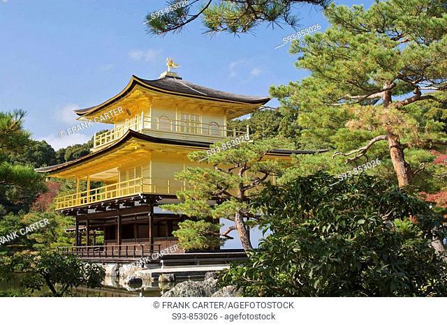 Kinkakuji, the Golden Temple is framed by bonsai-like pine trees