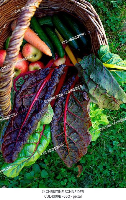 Basket of fruits and vegetables