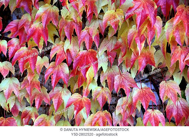 autumn scene, autumn colored leaves, park in Geneva, Switzerland