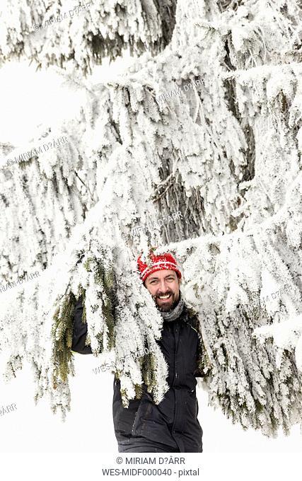 Germany, Baden-Wuerttemberg, Waldshut-Tiengen, smiling man in snow-capped fir tree