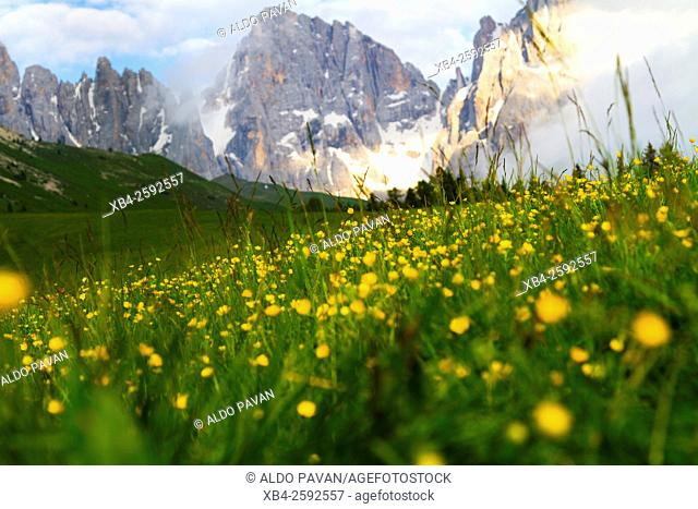 Meadows, Rolle Pass, Siror, Italy