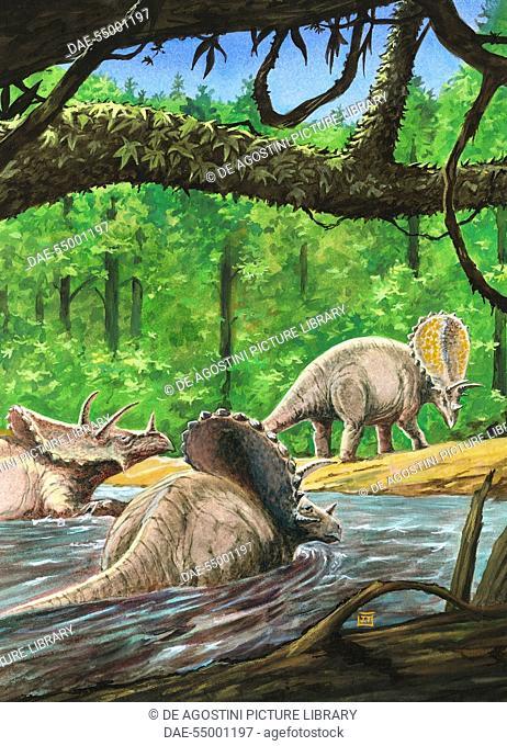 Pentaceratops sternbergii, Ceratopsidae, Late Cretaceous. Artwork by J Dang