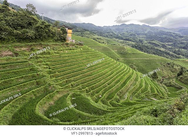 Asia,Asian,China,Guilin,Longsheng,Rice terrace