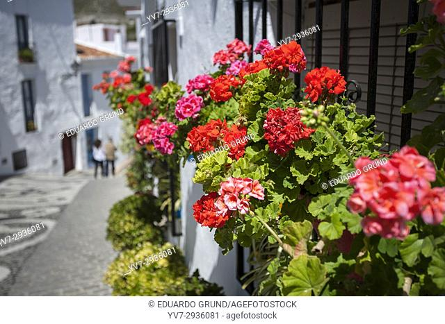 Flowerpots on the windows along the streets of Frigiliana. Frigiliana, Andalusia, Spain, Europe
