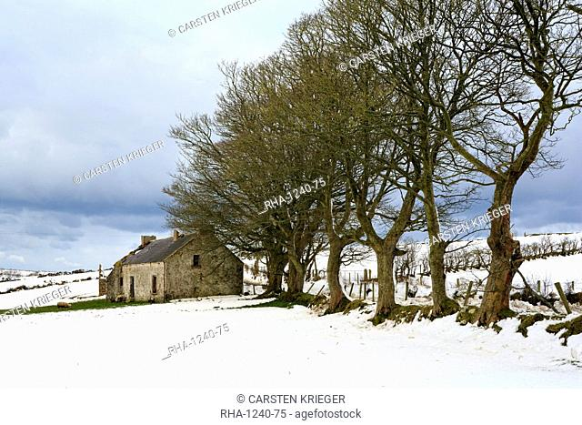 Cottage and trees, Torr Head, County Antrim, Ulster, Northern Ireland, United Kingdom, Europe